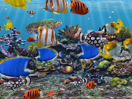 Скриншот к файлу: 3D Fish School Screensaver 4.91